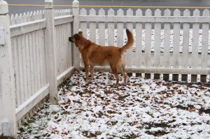 Pirate loved his Brookside home, even in the snow.