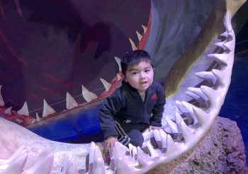 Chad & Jace Adventure – SeaQuest Aquarium